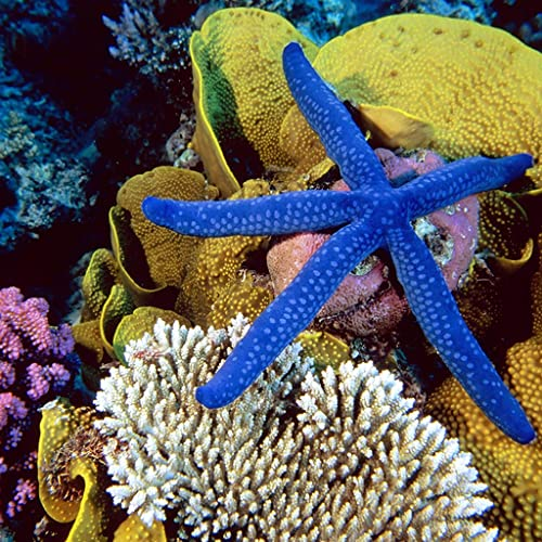 Undersea Fisch