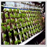 Learn to Plant Hydroponics