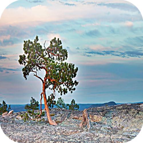 Blue Sky Tree HD Live Wallpaper