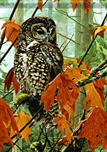 Carson Home Accents Fall Maple Owl Trends Classic Garden Flag