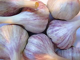 Best garlic bulbs for sale Reviews