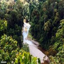 Rain Forest Animal sounds