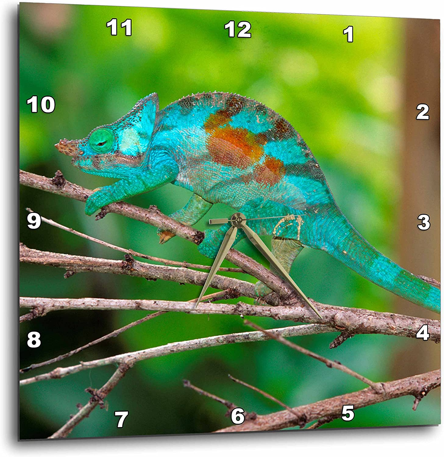 3dRose DPP_206065_2 A Parsons Chameleon Free shipping on posting reviews Along Branch Moving a Wa Ranking TOP3