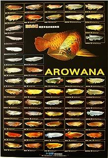AZOO Arowana Poster