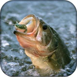 Joy Fishing Game
