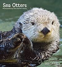 Sea Otters 2020 Wall Calendar
