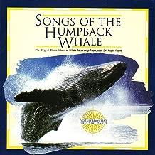 Solo Whale