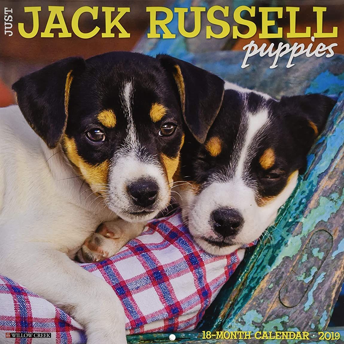 襲撃おなじみの成功Just Jack Russell Puppies 2019 Calendar