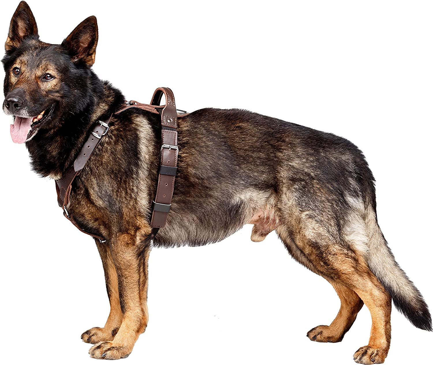 DINGO GEAR Company President's Harness For Dog, Symbol of Prosperity And Power, The Brown Classic Style, L