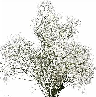 Best living fresh flowers Reviews