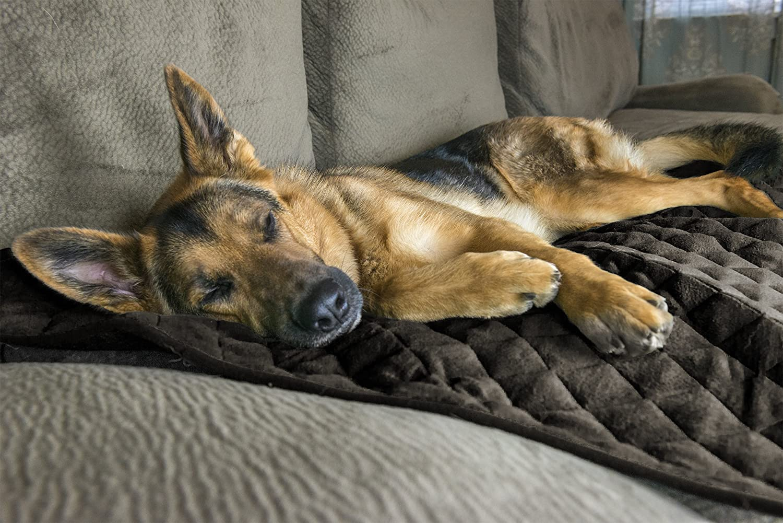 FurHaven Pet Warming Blanket   ThermaNAP Plush Velvet SelfWarming Pet Blanket, Espresso, Large