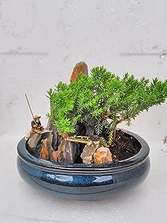 jmbamboo-bonsai- Juniper Tree Zen Garden With Pool Fishman