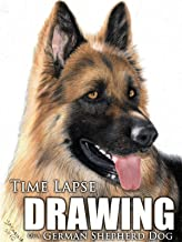Clip: Time Lapse Drawing of a German Shepherd Dog