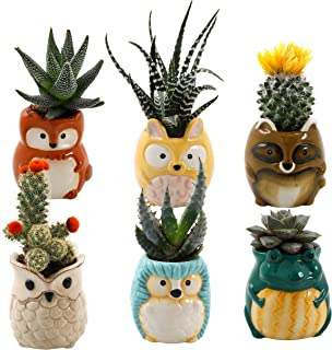 Animal Ceramic Succulent Planters Set of 6 | 2.5 Inch Small Cactus Pots with Drainage Hole Cute Gift Raccoon Owl Rabbit Hedgehog Frog Fox (Backyard Animals)