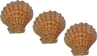 US Shell, 3 Piezas, Concha de mar de Pata de león, tamaño de 13 a 15 centímetros