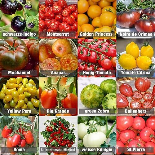Set de graines de tomates PRADEMIR – 16 variétés de tomates - Graines 100% naturelles du Portugal - Variétés rares et...