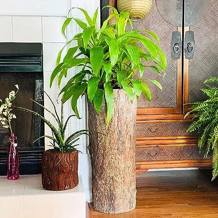 Country Corner Soporte Para Plantas Y Helechos Para Interiores Maceta De Resina De Cemento Rústico Alto Para Interiores Jardín Y Exteriores