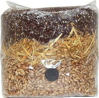 Best psilocybe cubensis spores grow kits Reviews