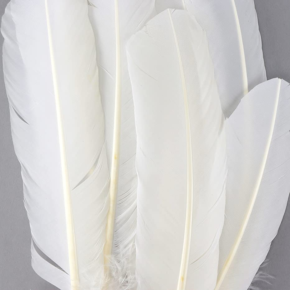 ZUCKER B712 Turkey Quills Dyed Feathers 10-12