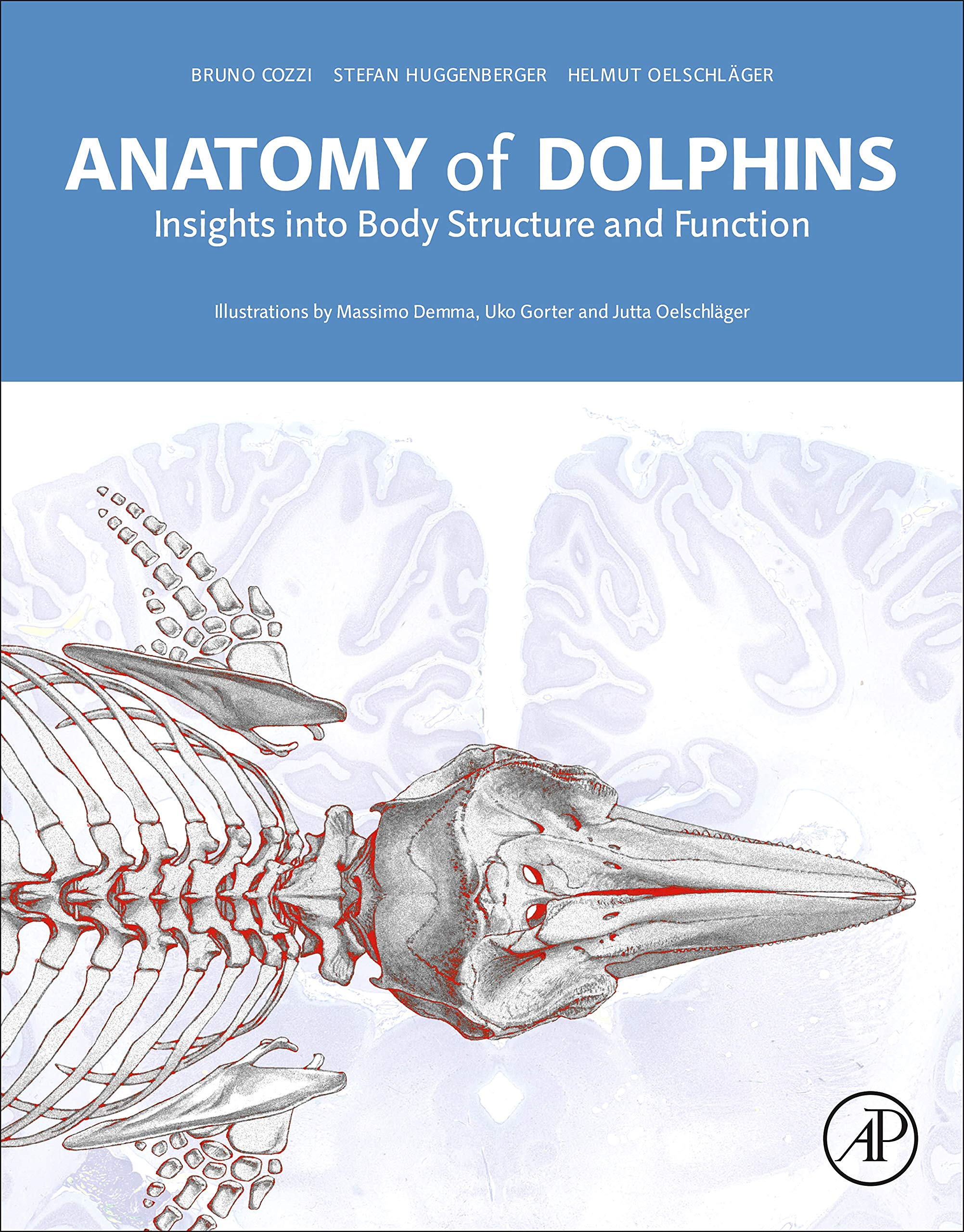 Image OfAnatomy Of Dolphins: Insights Into Body Structure And Function