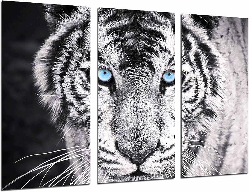 Cuadros Cámara Cuadro Fotográfico Tigre Blanco y Negro Ojos Azules Animales 97 x 62 cm XXL Multicolor