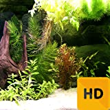 Amazing Aquarium HD FREE Wallpaper