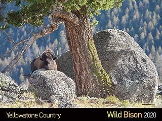 Best wild buffalo calendar Reviews