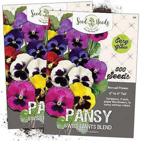 TAS Yes// WA No Heartsease// Johnny Jump Up// Small Pansy x 30 seeds Free Post
