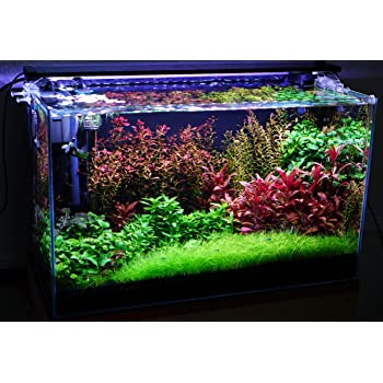 Vajra seeds Aquarium mixed plants 100 seeds and Random aquatic Water Grass 200 seeds packet