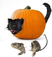 Best cat pumpkin decoration Reviews
