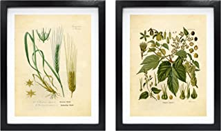 Ink Inc. Craft Beer Art Print – Hops and Barley Vintage Botanical Drawing – 8x10 Matte Unframed – Great Gift for Homebrewers and Beer Enthusiasts