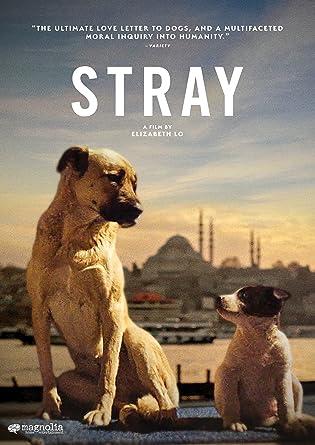 Film: Stray