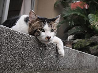 japan back street cats (路地裏の猫達)別府編  vol.1 japan  back street cats (路地裏の猫達)