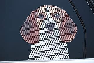 beagle truck box
