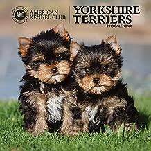 American Kennel Club Yorkshire Terriers 2018 Wall Calendar