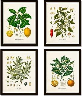botanical fruit prints