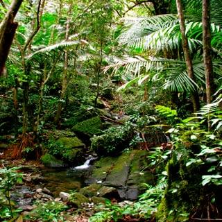 Relaxing Rainforest Sounds