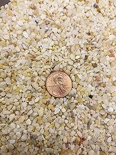 Coarse Silica Sand 1 Gallon for Bonsai, Cacti, Succulent, and Carnivorous plant mix