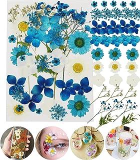 Fleurs pressé séchées Naturelles mélangées Multiples pour l'artisanat de Bricolage-Marguerites de colorées pour Bricolage ...