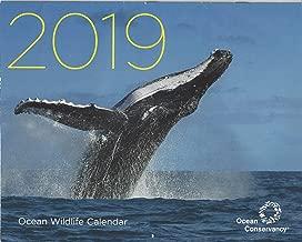 Ocean Wildlife Wall Calendar for 2019