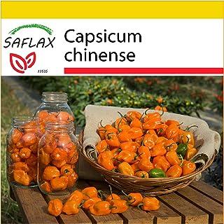 SAFLAX - Set de cultivo - Chile habanero amarillo - 10