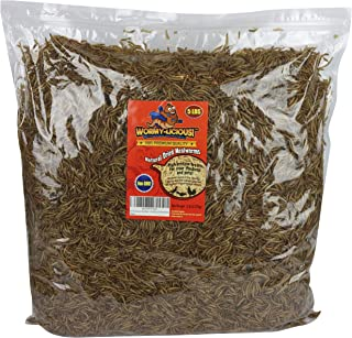 Wormy-Licious! Dried Mealworms in Bulk: Treats for Chickens and Wild Birds