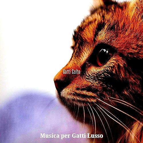 Momenti - Gatti Rilassanti Ricco Di Atmosfera de Musica