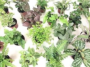 Best ferns for terrariums Reviews