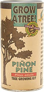 Piñon Pine | Tree Seed Grow Kit | The Jonsteen Company