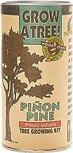 product image for Piñon Pine   Tree Seed Grow Kit   The Jonsteen Company