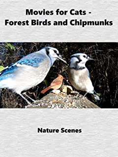 Movies For Cats - Forest Birds and Chipmunks