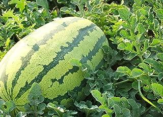 Watermelon Seeds 10g Crimson Sweet Watermelon Garden Organic Chinese Fresh Fruit Seeds for Planting Outdoor