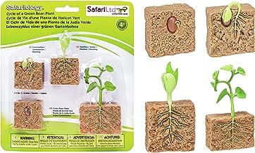 Safari Ltd. Ciclo de Vida de una Planta de Frijol Verde