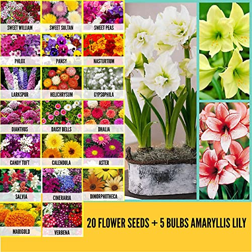 Leafy Tales 20 Varieties of Flower Seeds & 5 Bulbs of Amaryllis Lily | Home Plant, Live Plant
